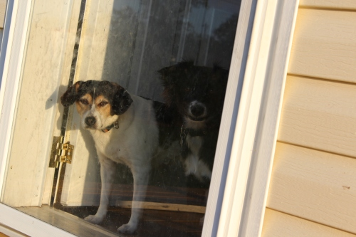 Can we come outside too, Mom?